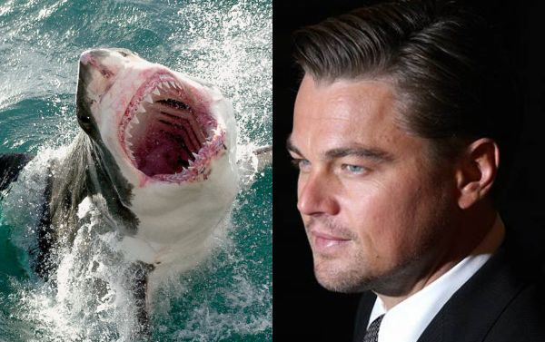 Leonardo DiCaprio Survived a 'Terrifying' Shark Attack