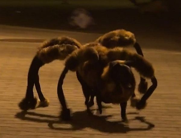 Video: The 'Mutant Giant Spider Dog' Prank Reactions Are Priceless